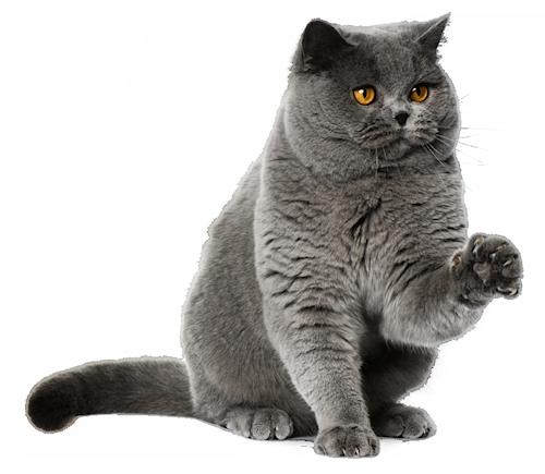 груминг кошек киев